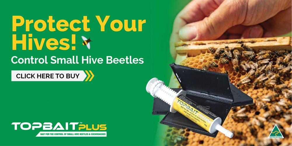 Protect Your Beehives From Small Hive Beetles